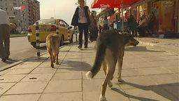 hunde-aus-dem-ausland-verstopfen-die-tierheime-110-_v-ARDAustauschformat